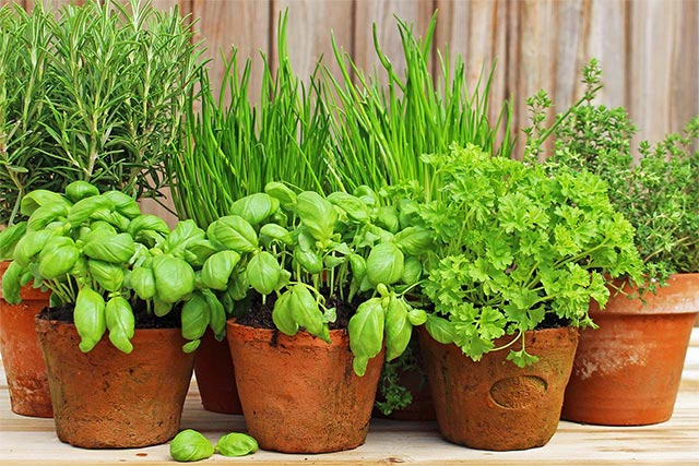 HERB GARDEN IN A POT